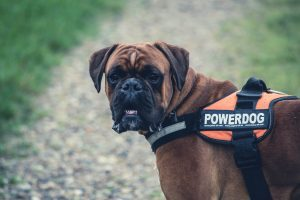 Are Assistance Animals Safe For Your Property?